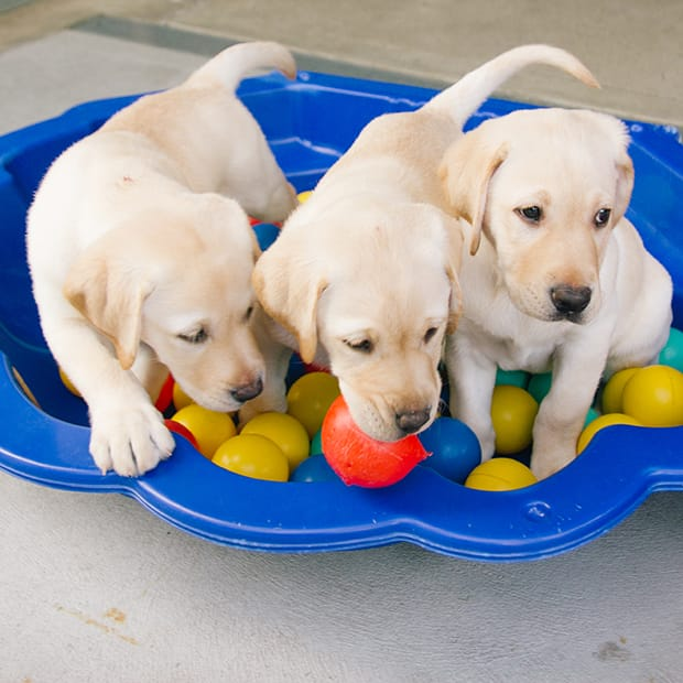 Guide-Dog-Photos-(47-of-55)-620.jpg