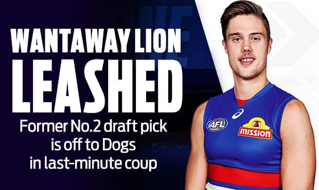 Wantaway-Lion-Leashed-AFL-v2.jpg