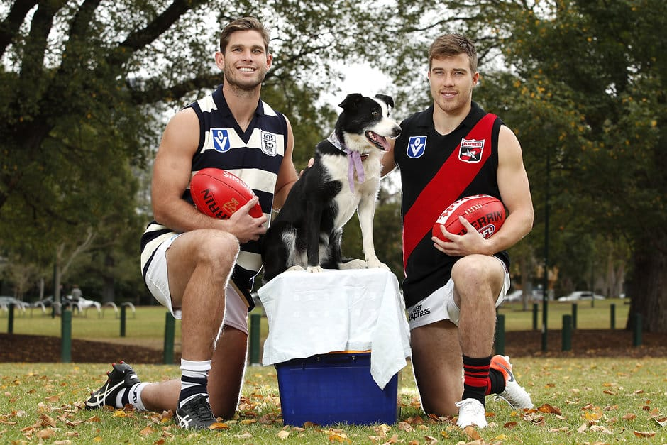 Powercor will continue to headline the Country Festival played between the Cats and Bombers.  - Geelong Cats